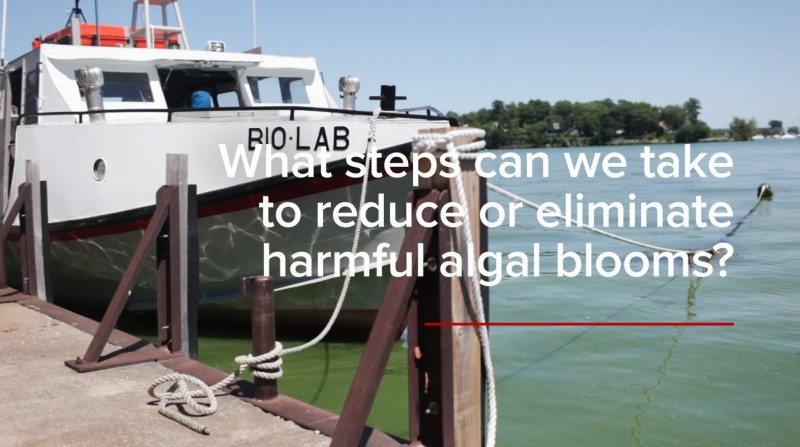 HABs FAQs: What steps can we take to reduce or eliminate harmful algal blooms?