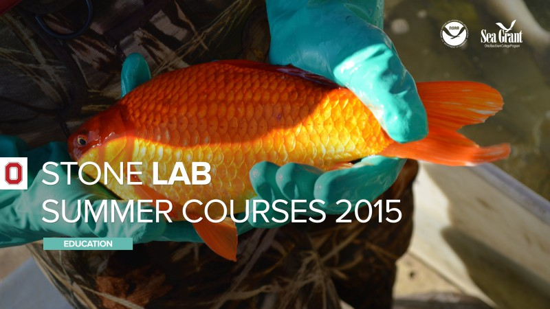 Stone Lab Summer Courses 2015