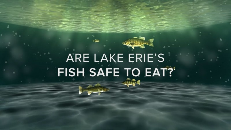 Are Lake Erie's Fish Safe?