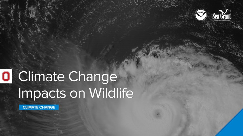Climate Webinar: Climate Change Impacts on Wildlife