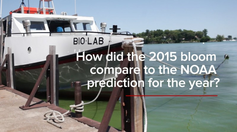 HABs FAQs: Was the 2015 algal bloom as bad as expected?