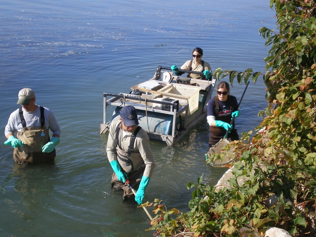Stone Lab Workshops Offer Professional Development Opportunities and an Up-Close Look at Lake Erie