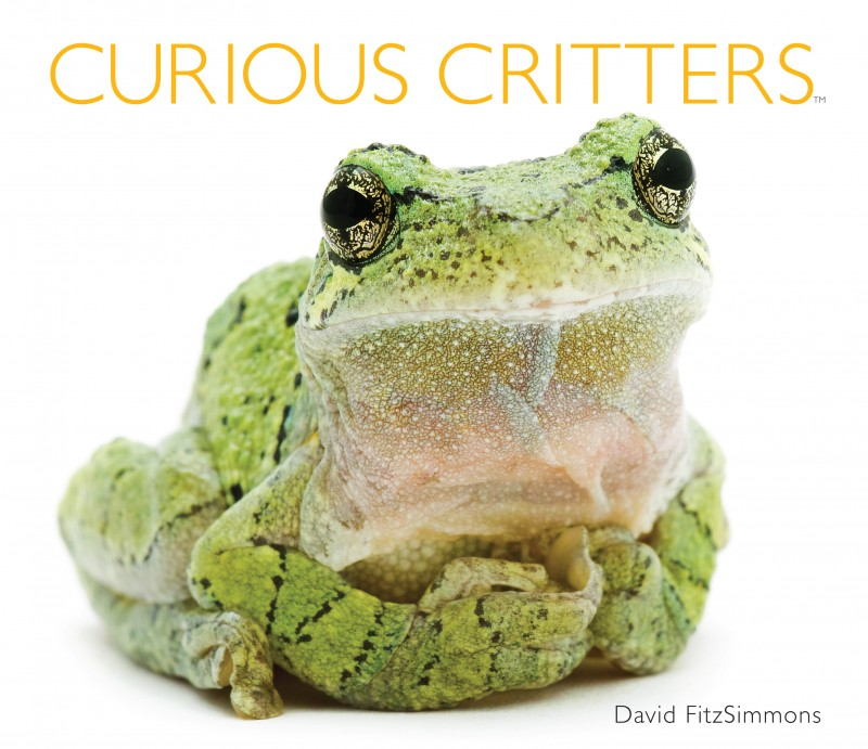 Curious Critters book cover