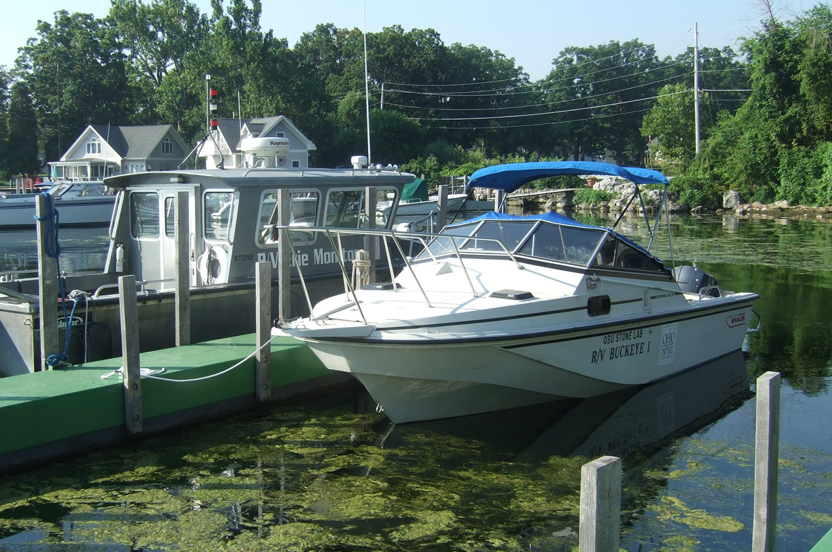 Buckeye I Boston Whaler
