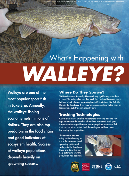 Aquatic Visitors Center: What's happening with walleye?